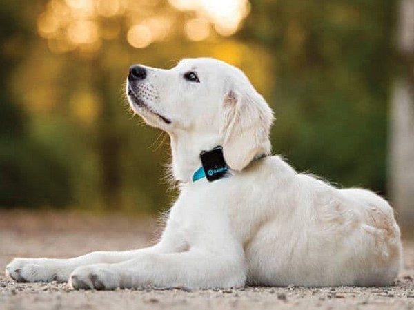 ردیاب زیرپوستی حیوانات چیست؟